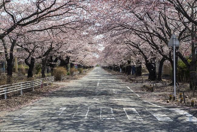 Chùm ảnh: Những bức hình ám ảnh về thị trấn ma sau thảm họa nhà máy hạt nhân Fukushima, Nhật Bản 2011 - Ảnh 17.