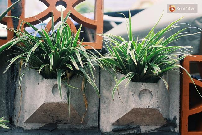 Gặp cậu SV Báo chí - tác giả của 4 vườn hoa mọc lên từ bãi rác ở Hà Nội - Ảnh 3.