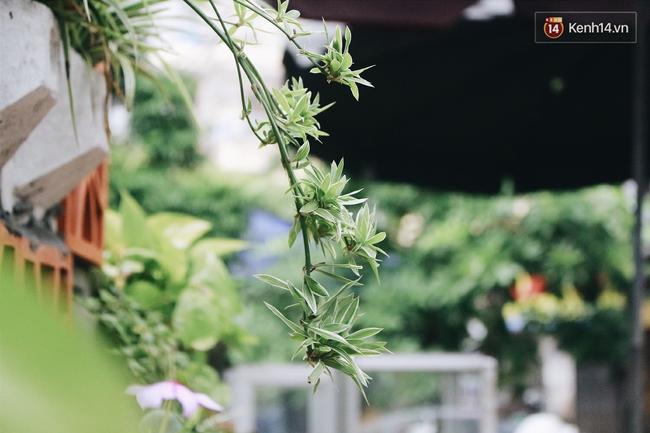 Gặp cậu SV Báo chí - tác giả của 4 vườn hoa mọc lên từ bãi rác ở Hà Nội - Ảnh 2.