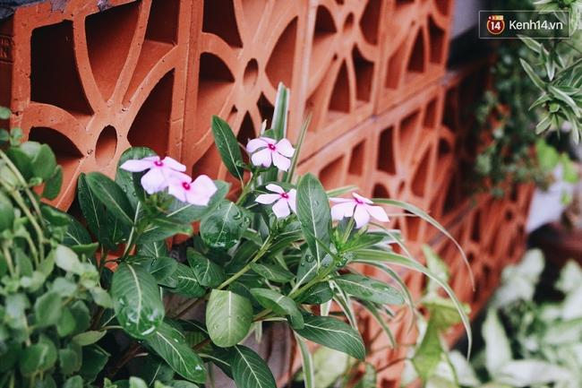 Gặp cậu SV Báo chí - tác giả của 4 vườn hoa mọc lên từ bãi rác ở Hà Nội - Ảnh 11.