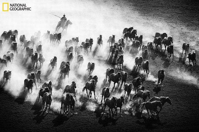 Những bức ảnh đẹp ngỡ ngàng về thế giới tự nhiên trong cuộc thi của Tạp chí National Geographic - Ảnh 5.