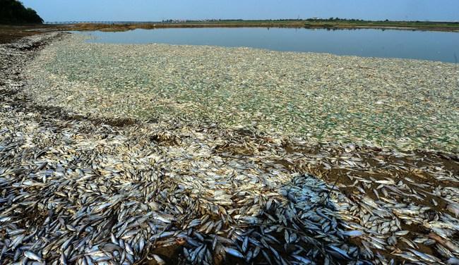 Rùng mình trước hình ảnh những dòng sông đầy rác thải và xác cá chết - Ảnh 5.
