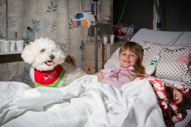 Thú cưng giúp bệnh nhân phục hồi nhanh hơn tới 30% - Ảnh 4.