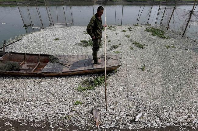 Rùng mình trước hình ảnh những dòng sông đầy rác thải và xác cá chết - Ảnh 4.