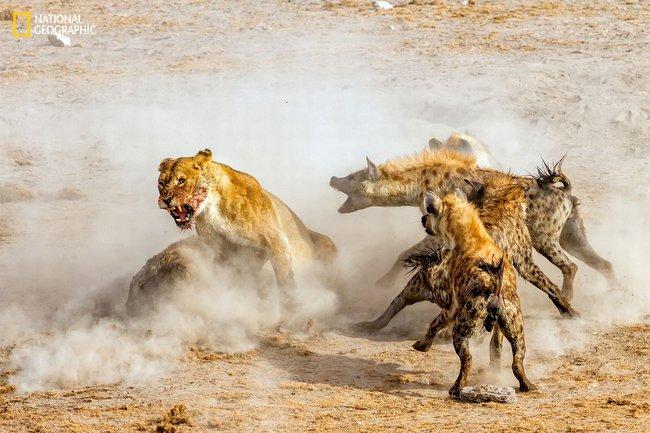 Những bức ảnh đẹp ngỡ ngàng về thế giới tự nhiên trong cuộc thi của Tạp chí National Geographic - Ảnh 7.
