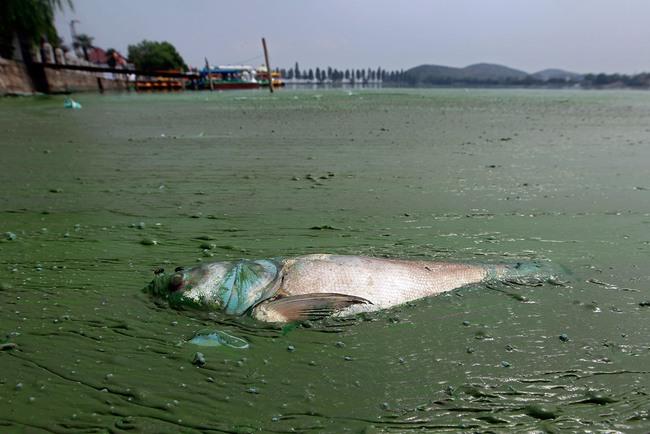 Rùng mình trước hình ảnh những dòng sông đầy rác thải và xác cá chết - Ảnh 10.