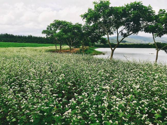 Những nơi chụp ảnh siêu đẹp ở Đà Lạt trong MV của Quang Vinh mà bạn nhất định phải ghé! - Ảnh 9.