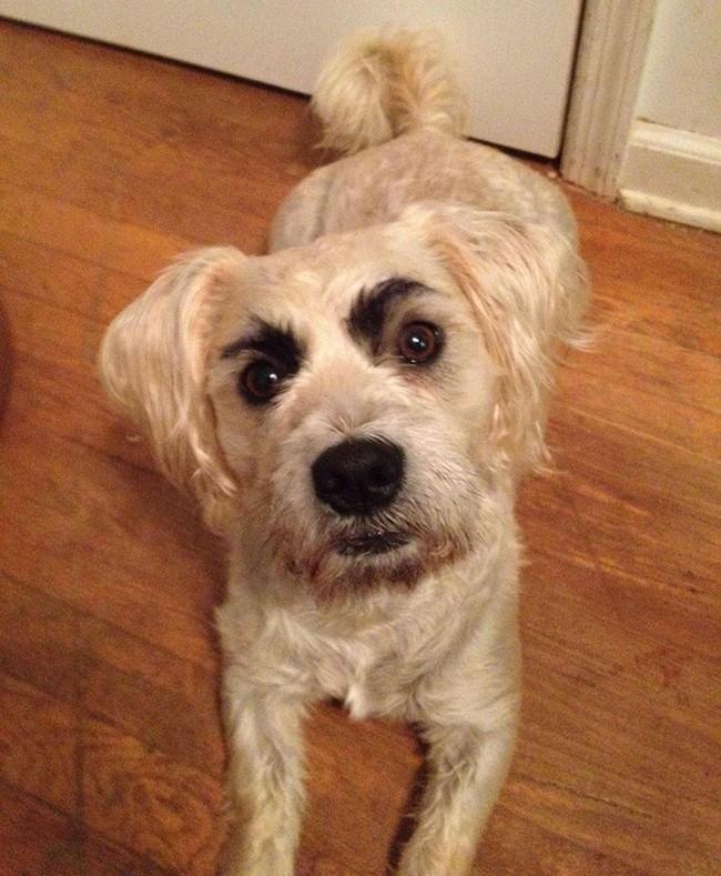 17 em chó có lông mày còn kinh dị hơn cả lông mày nhể ốc - Ảnh 1.