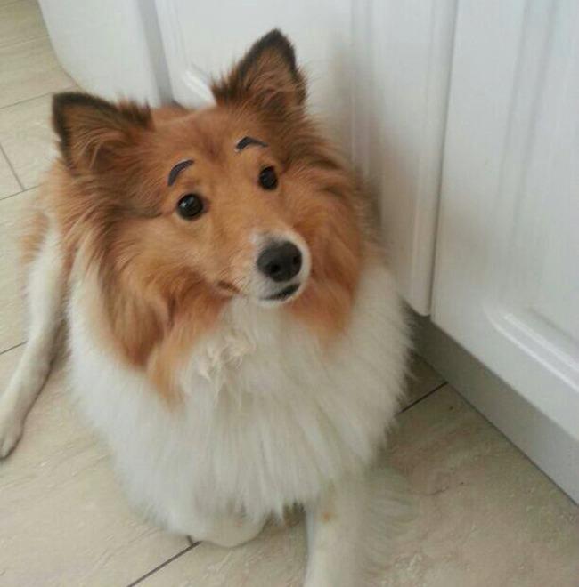 17 em chó có lông mày còn kinh dị hơn cả lông mày nhể ốc - Ảnh 2.