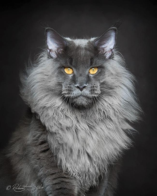 Gặp gỡ 16 mỹ nhân đẹp nhất vương quốc mèo - Ảnh 3.