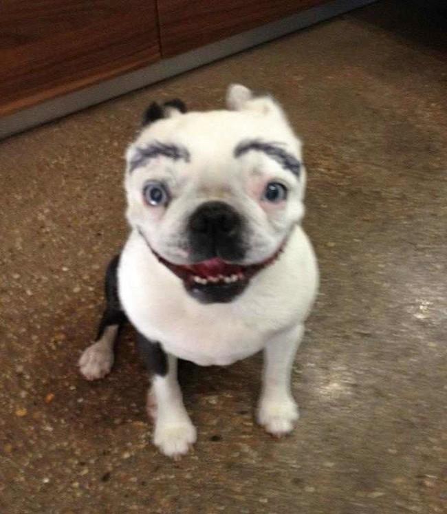 17 em chó có lông mày còn kinh dị hơn cả lông mày nhể ốc - Ảnh 3.