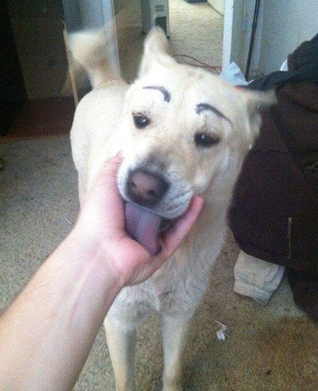17 em chó có lông mày còn kinh dị hơn cả lông mày nhể ốc - Ảnh 4.