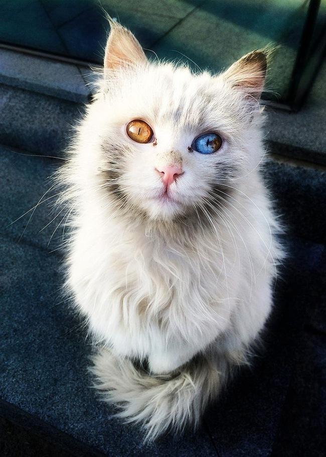 Gặp gỡ 16 mỹ nhân đẹp nhất vương quốc mèo - Ảnh 7.