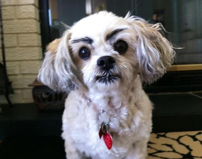 17 em chó có lông mày còn kinh dị hơn cả lông mày nhể ốc - Ảnh 5.