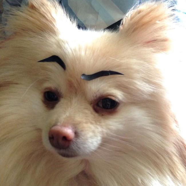 17 em chó có lông mày còn kinh dị hơn cả lông mày nhể ốc - Ảnh 6.