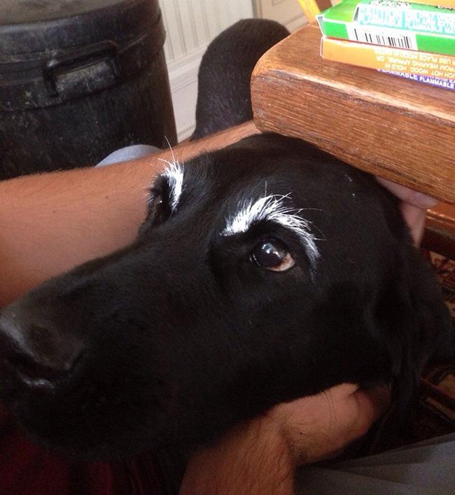 17 em chó có lông mày còn kinh dị hơn cả lông mày nhể ốc - Ảnh 7.