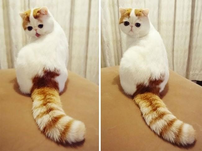 Gặp gỡ 16 mỹ nhân đẹp nhất vương quốc mèo - Ảnh 13.