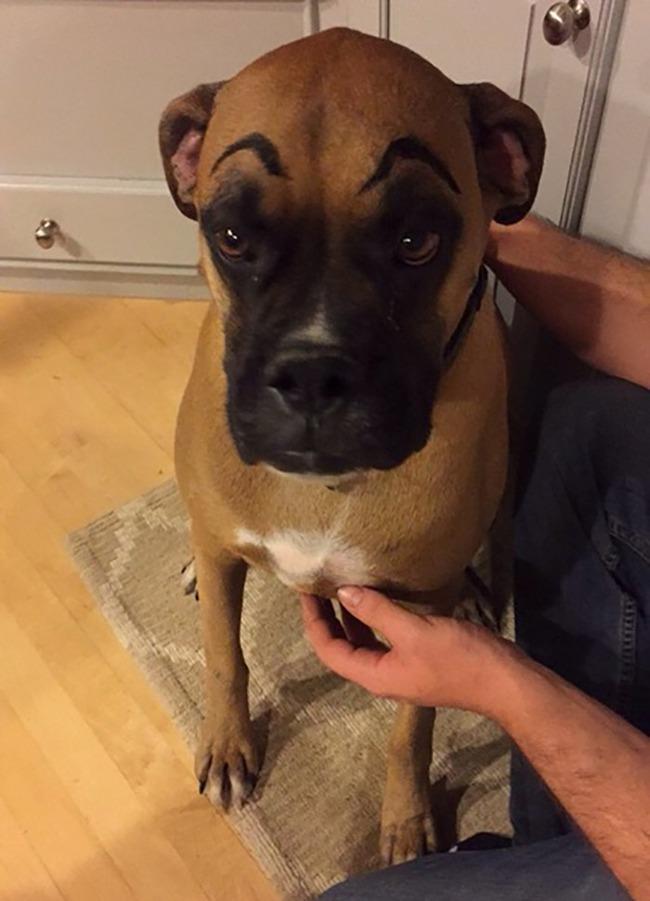 17 em chó có lông mày còn kinh dị hơn cả lông mày nhể ốc - Ảnh 17.