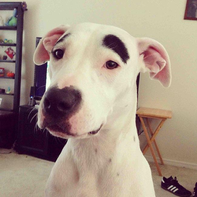 17 em chó có lông mày còn kinh dị hơn cả lông mày nhể ốc - Ảnh 10.