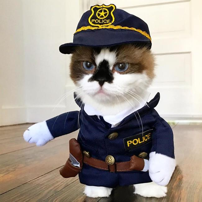 Chú mèo mũi đen thích cosplay đốn tim gần nửa triệu người trên Instagram - Ảnh 17.