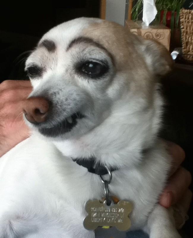 17 em chó có lông mày còn kinh dị hơn cả lông mày nhể ốc - Ảnh 11.