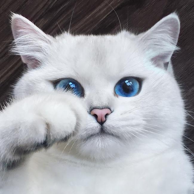 Gặp gỡ 16 mỹ nhân đẹp nhất vương quốc mèo - Ảnh 19.