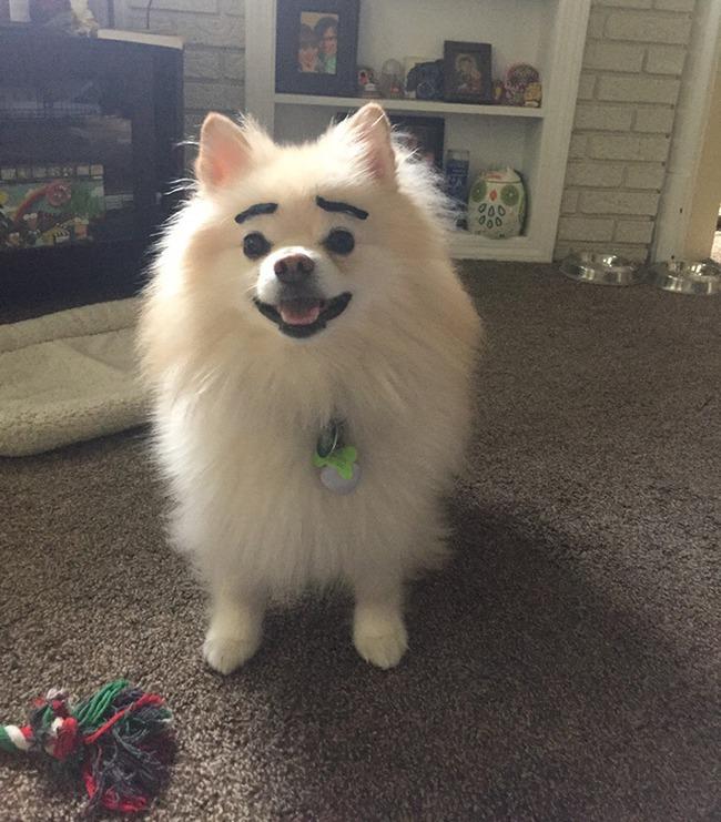 17 em chó có lông mày còn kinh dị hơn cả lông mày nhể ốc - Ảnh 12.