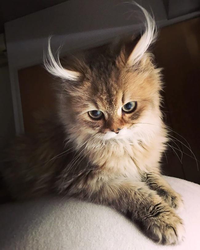 Gặp gỡ 16 mỹ nhân đẹp nhất vương quốc mèo - Ảnh 21.