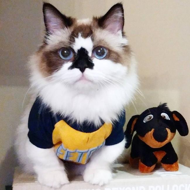 Chú mèo mũi đen thích cosplay đốn tim gần nửa triệu người trên Instagram - Ảnh 5.