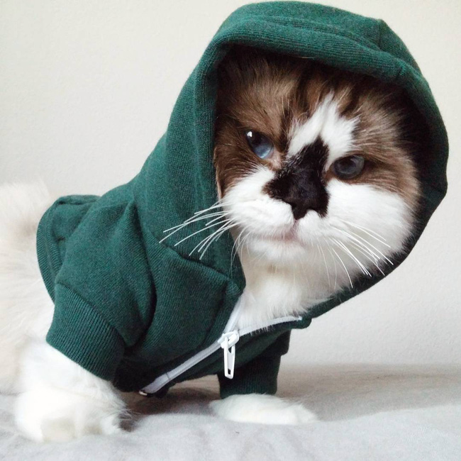 Chú mèo mũi đen thích cosplay đốn tim gần nửa triệu người trên Instagram - Ảnh 1.