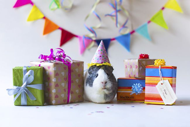 Loài chuột thật đáng ghét nhưng bé chuột lang béo núc ních thì không - Ảnh 8.
