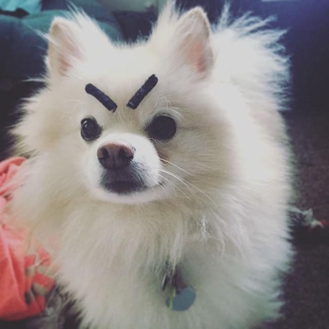 17 em chó có lông mày còn kinh dị hơn cả lông mày nhể ốc - Ảnh 14.