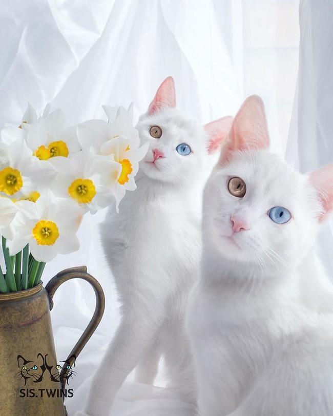 Gặp gỡ 16 mỹ nhân đẹp nhất vương quốc mèo - Ảnh 25.