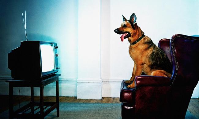 Chó nhà bạn thấy những gì khi ngồi xem TV? - Ảnh 4.