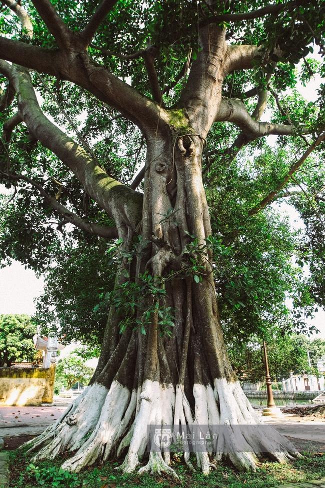 Ít ai biết ở gần Hà Nội có ngôi làng cổ hơn 200 năm tuổi, đẹp như tranh! - Ảnh 15.