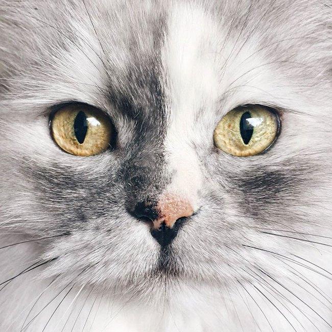 Có em mèo lông xù xinh thế này, chắc cả ngày ngồi ôm cũng không chán - Ảnh 2.