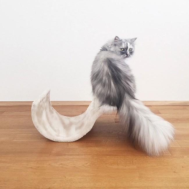 Có em mèo lông xù xinh thế này, chắc cả ngày ngồi ôm cũng không chán - Ảnh 4.