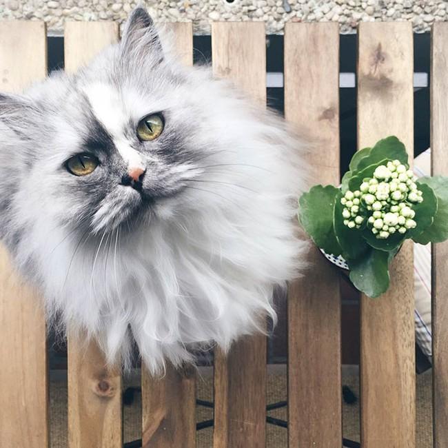 Có em mèo lông xù xinh thế này, chắc cả ngày ngồi ôm cũng không chán - Ảnh 5.