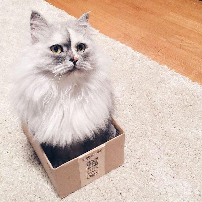 Có em mèo lông xù xinh thế này, chắc cả ngày ngồi ôm cũng không chán - Ảnh 10.