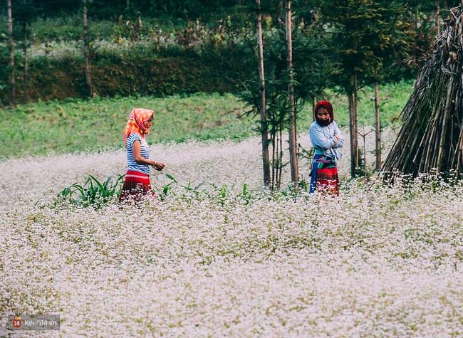 Tháng 11 đến rồi, nhất định phải đi Tây Bắc để hưởng cái lạnh và ngắm 3 loài hoa này - Ảnh 7.