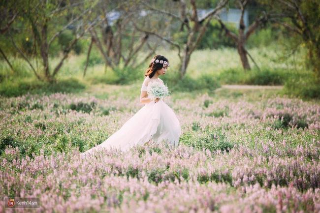 Một cánh đồng hoa bao la với bầy cừu xinh xắn, ở Hà Nội cũng có rồi đấy! - Ảnh 3.