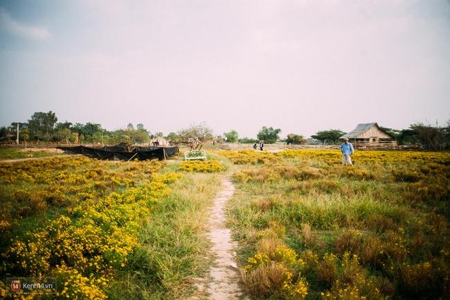 Một cánh đồng hoa bao la với bầy cừu xinh xắn, ở Hà Nội cũng có rồi đấy! - Ảnh 8.