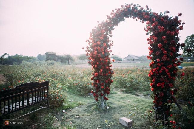 Một cánh đồng hoa bao la với bầy cừu xinh xắn, ở Hà Nội cũng có rồi đấy! - Ảnh 16.