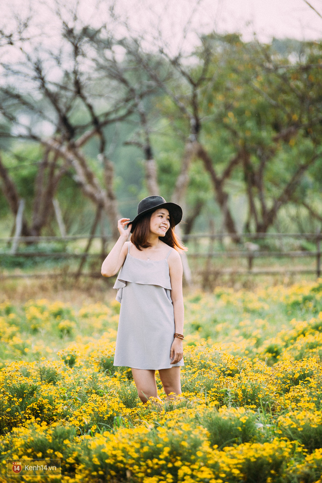 Một cánh đồng hoa bao la với bầy cừu xinh xắn, ở Hà Nội cũng có rồi đấy! - Ảnh 12.