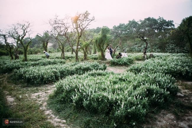 Một cánh đồng hoa bao la với bầy cừu xinh xắn, ở Hà Nội cũng có rồi đấy! - Ảnh 11.