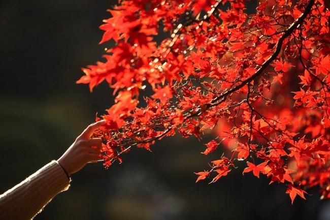 Ngắm nhìn Nhật Bản trầm mặc mà vẫn đẹp đến nao lòng mỗi độ thu sang - Ảnh 2.