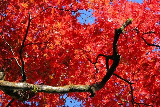 Ngắm nhìn Nhật Bản trầm mặc mà vẫn đẹp đến nao lòng mỗi độ thu sang - Ảnh 5.