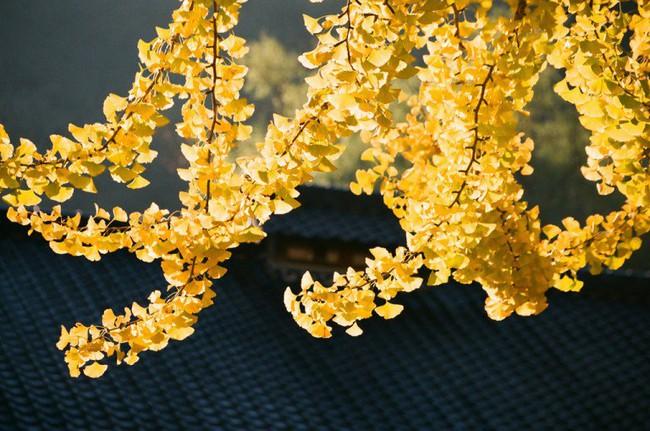 Ngắm nhìn Nhật Bản trầm mặc mà vẫn đẹp đến nao lòng mỗi độ thu sang - Ảnh 10.