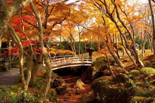 Ngắm nhìn Nhật Bản trầm mặc mà vẫn đẹp đến nao lòng mỗi độ thu sang - Ảnh 11.