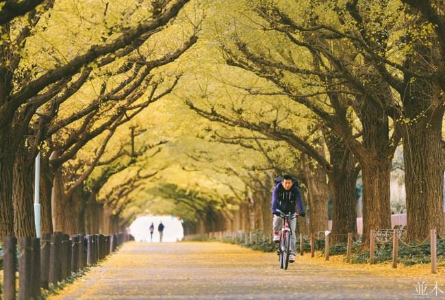 Ngắm nhìn Nhật Bản trầm mặc mà vẫn đẹp đến nao lòng mỗi độ thu sang - Ảnh 13.